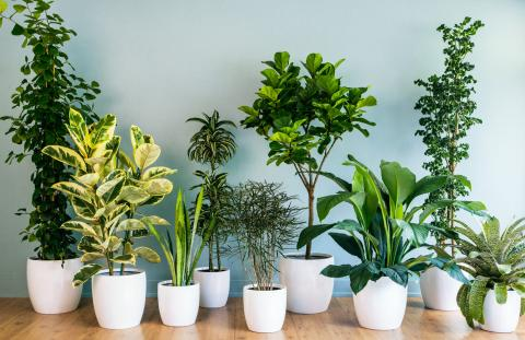 Benefits of Artificial Indoor Plants | Home Pros Restoration